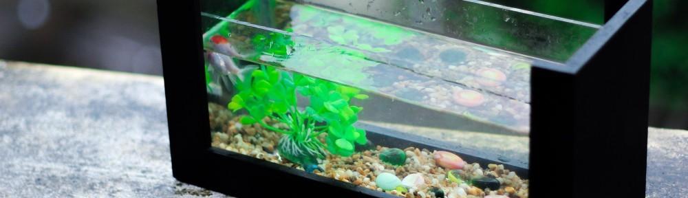 Heizungen für's Aquarium