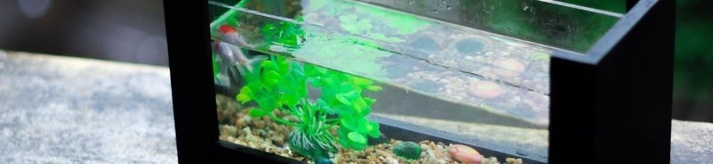 Heizungen und Zubehör für Ihr Aquarium